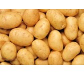 Sithharan to be developed as potato seed village in J&K