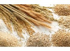 Union Cabinet approves further allocation of additional foodgrain to NFSA beneficiaries under Pradhan Mantri Garib Kalyan Yojana
